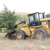 Super Jawz on a CAT 924G pulling a tree by the roots